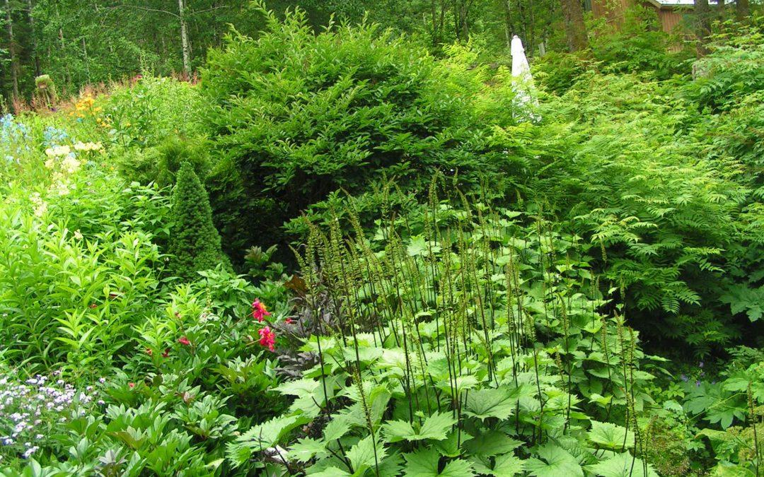 Using Native Plants in the Domestic Landscape